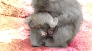 Difficult child baby monkey / Cute Animal
