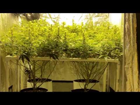 4×4 grow tents ep. 6