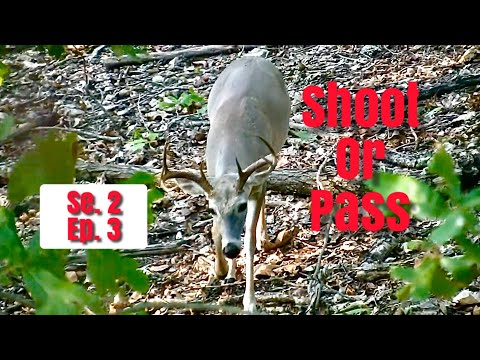 Nice Buck Hunting Public Land In Oklahoma