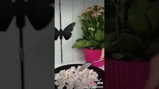 #Салат подсолнух #вкусно #быстро #видео уроки