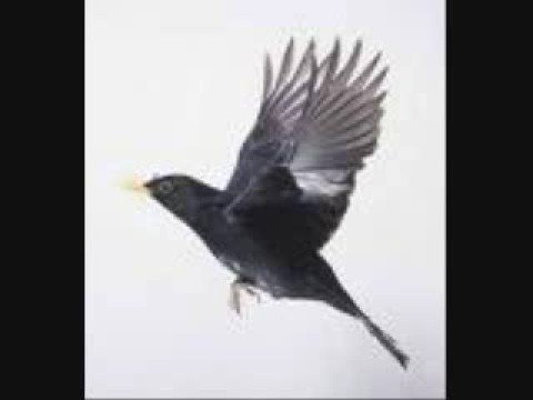 Blackbird - Across the Universe - with Lyrics