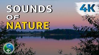 Утро, река, на рассвете. Природа, звуки деревни, пение птиц, цикады, релакс
