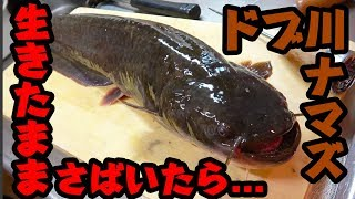 【閲覧注意】ドブ川で釣った巨大ナマズを生きたままさばいた結果... thumbnail