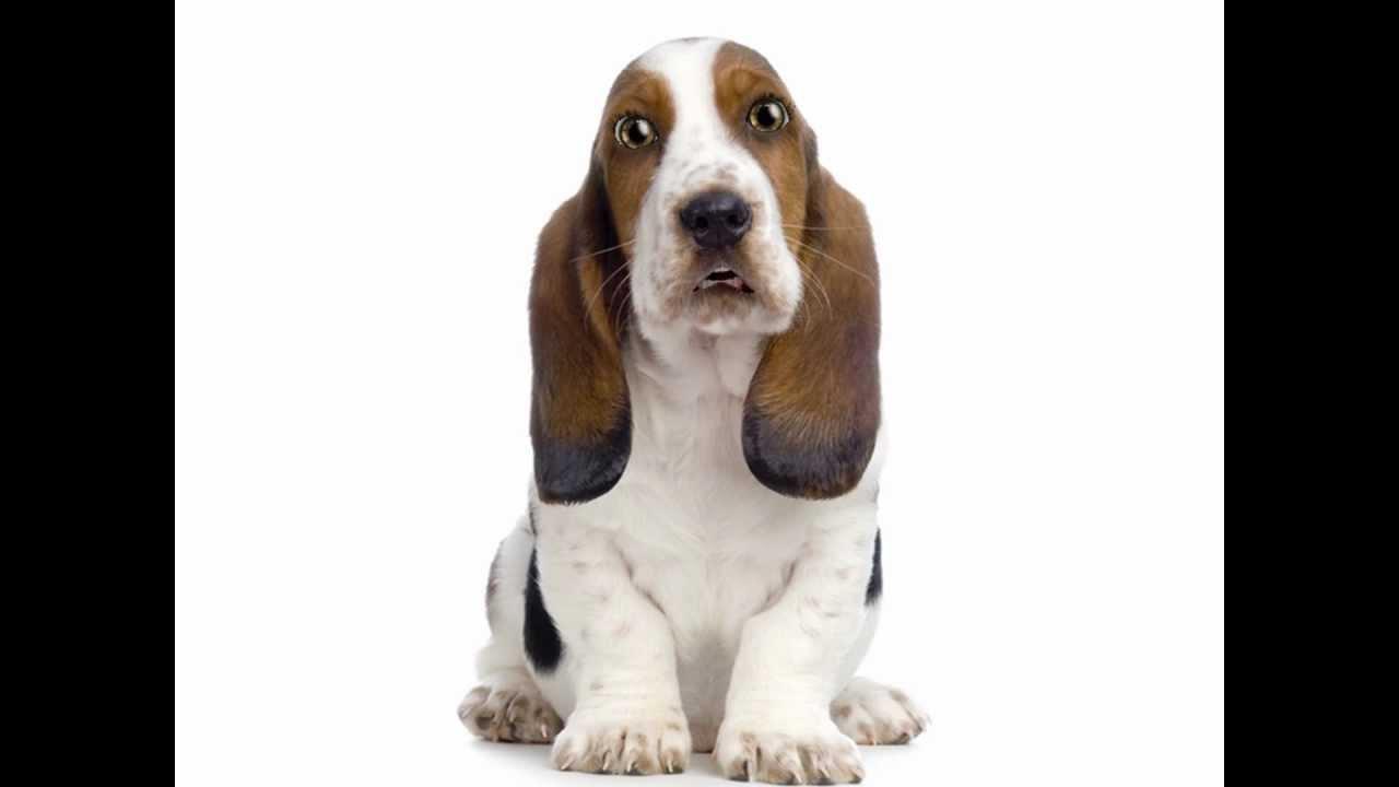 FUNNY Talking Dog Jokes - Pets Made Portable