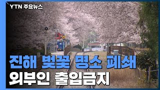 진해 벚꽃 명소 폐쇄 조치로 한산...대구 도심은 조금…