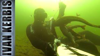 Подводная охота ХАРИУС НАЛИМ февраль 2016(Подводная охота на течении в Сибири на Енисее на хариуса и налима г. Красноярск #ПодводнаяОхота #ПодводнаяО..., 2016-03-03T07:23:04.000Z)