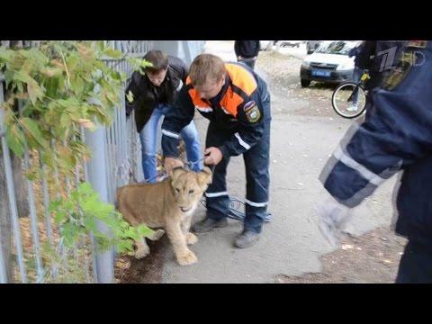 лев уфа 37 знакомства