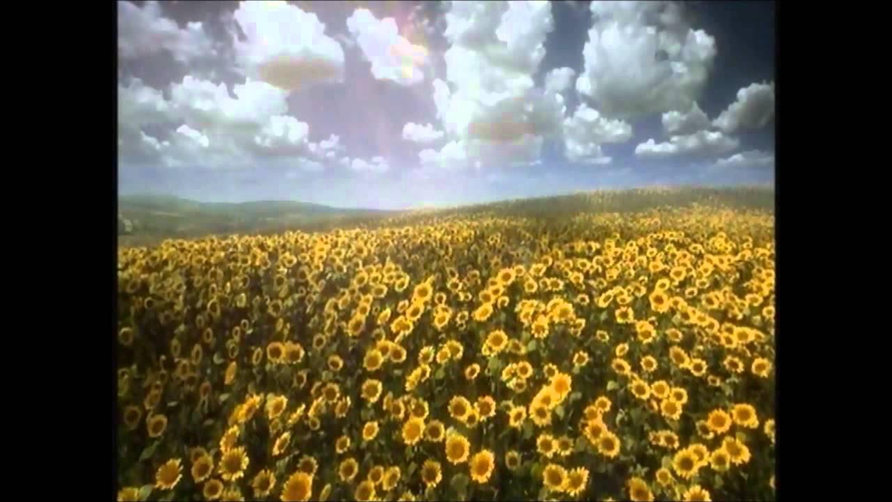 itv 1 sunflowers ident