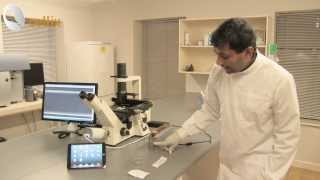 Cell Rolling and Adhesion Assays with ExiGo Pump