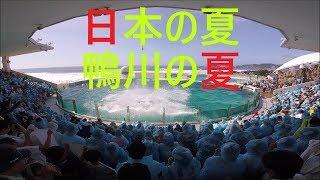 鴨川シーワールド 2019 シャチパフォーマンス527 ゴープロで日本の夏、鴨川の夏のサマースプラッシュをスーパービューで撮ってみた killerwhale show