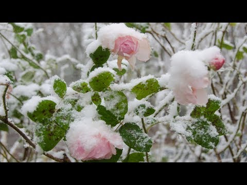 Secret Garden - Lament For A Frozen Flower