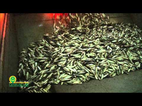 PROFIFISH FISH MEAL & FISH OIL PRODUCTION