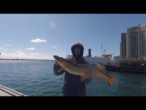 TORONTO PIKE FISHING: HARBOURFRONT & 3 BIG PIKE - MARCH 2018