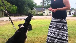Dog Training In San Jose By Canine Tutors