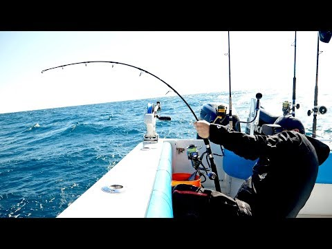 The Florida Cobia Fishing Challenge - 4K