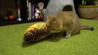 アイドルキャットのホシコさん。お魚のぬいぐりみをゲットしちょっとハッスル
