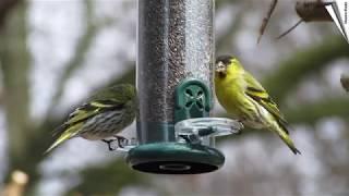 energiebloecke für vögel