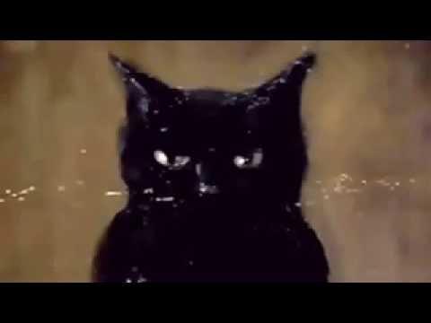 Bram Stoker: La Gata Negra (Serie Radioteatro)