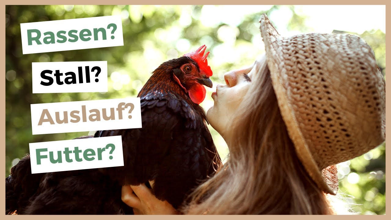 warum legen meine hühner keine eier