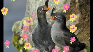 udit narayan very romantic song(aap ko samnja ha jaab sa zindgi)