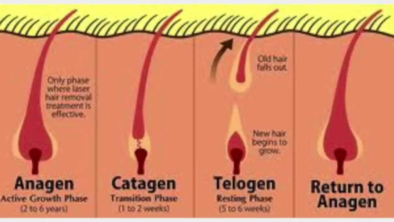 Forensic Hair Analysis - YouTube
