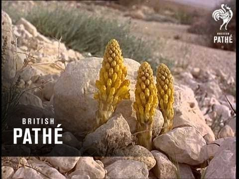 Israel - Land Of The Four Seas (1966)