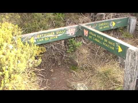 Dunedin - Mt Cargill Walk