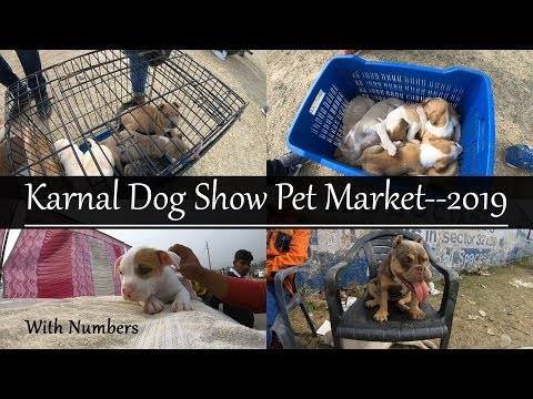 Karnal Dog Show Pet Market--2019 with Numbers