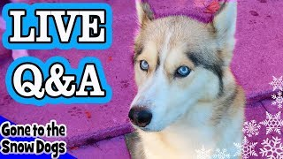 LIVE Q&A with Gone to the Snow Dogs | Siberian Huskies Live