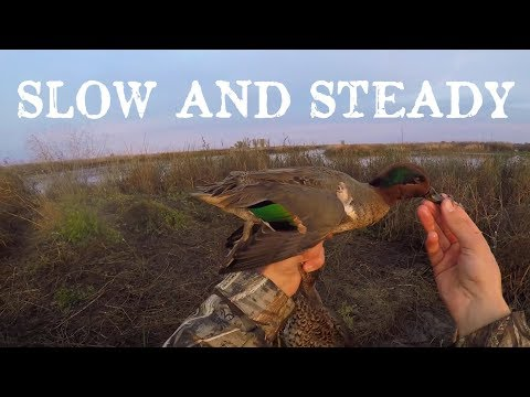 California Duck Hunt - Colusa NWR Resi #1