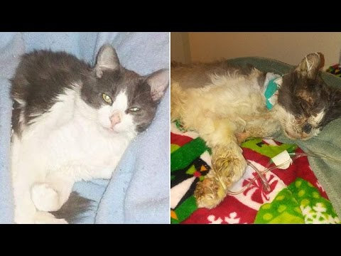 Family Cat Dies After Being Horrifically Tortured With Hot Glue Gun