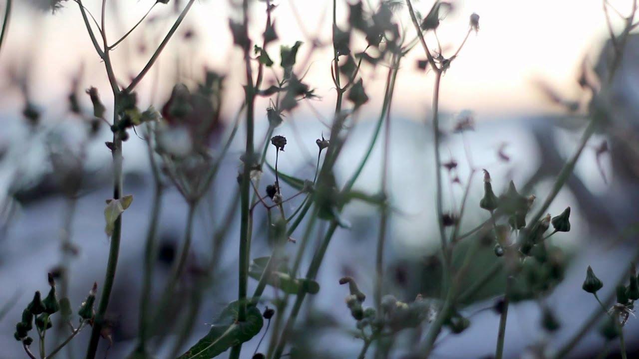 FRAMED] Episode 15: Jay Goodrich Nature Photography - YouTube
