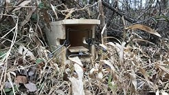 Simple Box Traps  Mink Box