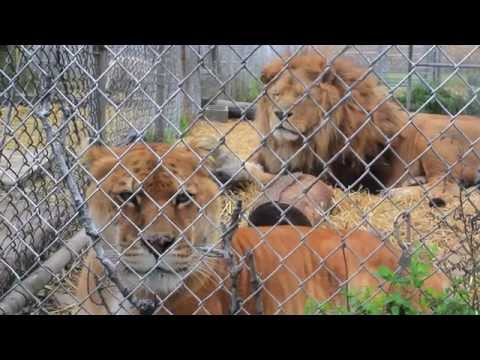 Safe Haven Animal Sanctuary - Documentary