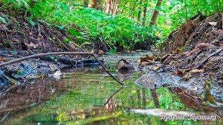 Ручей в лесу, шум, звук, журчание воды, вода течет, звуки природы, лесной ручей, природа, релакс.