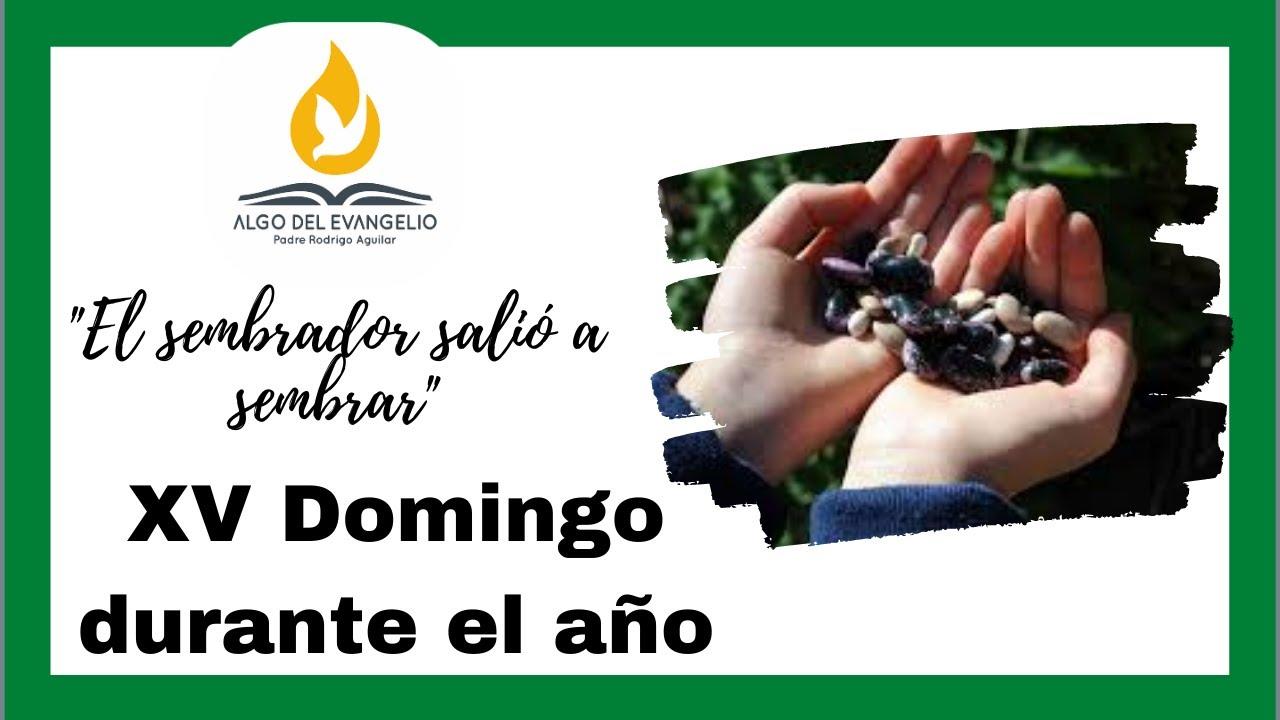 EVANGELIO DE HOY - XV Domingo durante el año - 12 de julio - Mateo 13, 1-9 - Dieron fruto