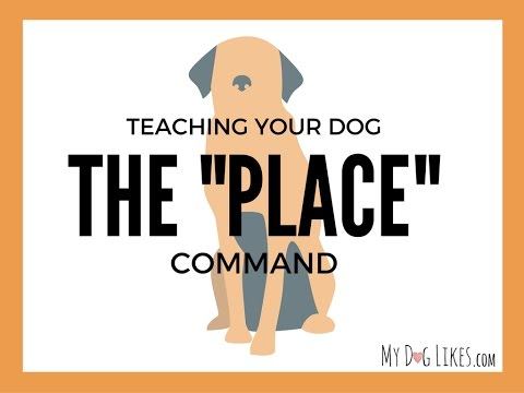 Teaching your Dog the Place Command