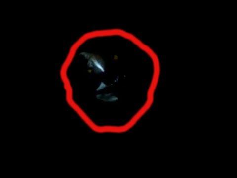 РЕЙК НАПУГАЛ ОХОТНИКА В НОВОМ ГОДУ странные существа снятые на видео. неизвестное существо нло 2018