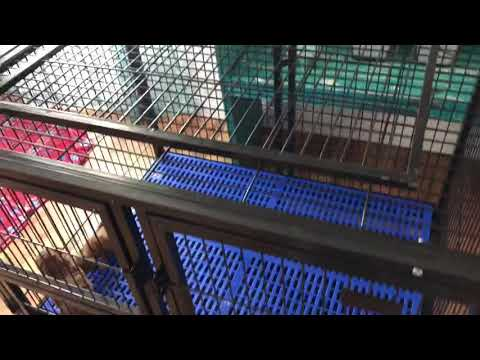 High Quality Solid Metal Dog Crate - LB Empire Kennels Crate Review