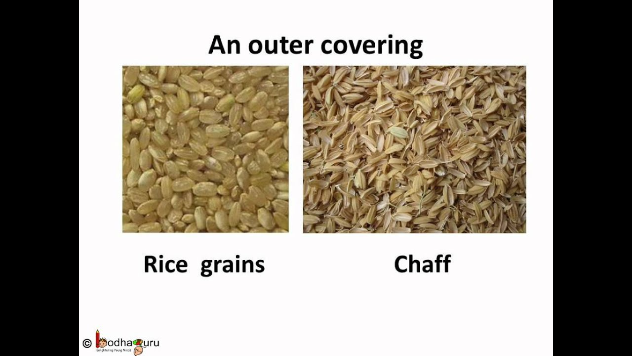 Science - Separation Methods - Rice - English