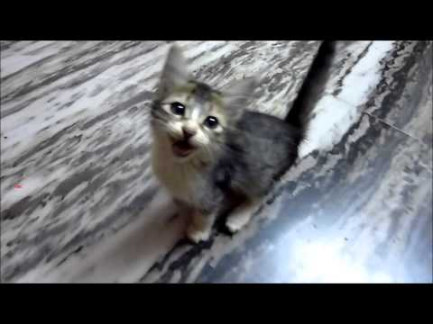Very cute kitten follows me everywhere !