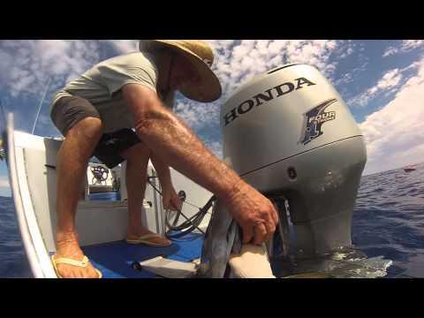 Norfolk Island spearfishing update yellow fin tuna
