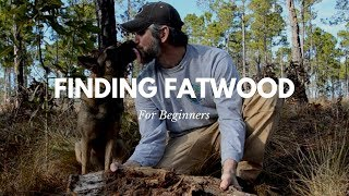 Fatwood: How to Find It Easily