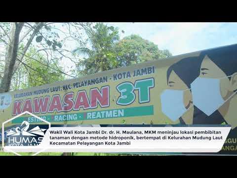 Wawako Maulana Meninjau Lokasi Pembibitan Tanaman Dengan Metode Hidroponik