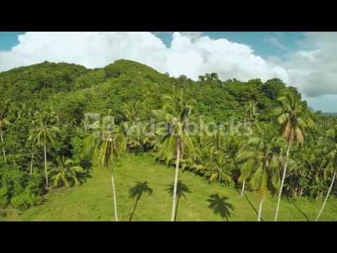 RAINFOREST AND JUNGLE PALM TREES PHILIPPINES HR0YA4RLG