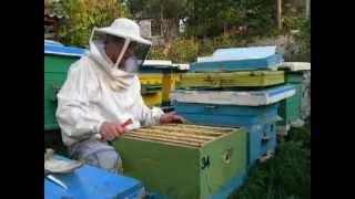 Пчеловодство bee(собираю гнездо в зиму)