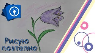 Уроки рисования поэтапно | Цветок Колокольчик | Простые рисунки