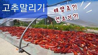 고추말리는방법|시골집엄마들화이팅!|김장준비중