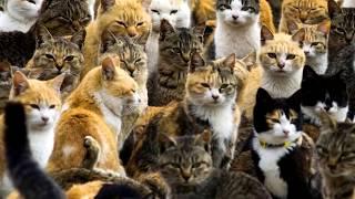 Познавательные факты о кошках. Факты о котиках