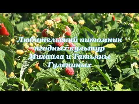 """Малина """"Похвалинка"""""""